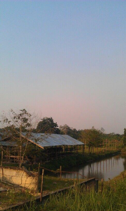 Di suatu pelosok (Pekan Baru, Riau) (Taken by my HTC Desire HD)   #mobilephotography #androidcommunity #pekanbaru #riau #indonesia