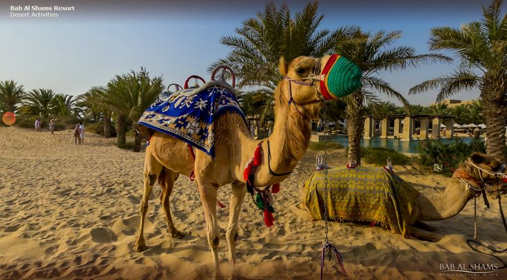 Explore an array of desert activities around the resort such as: camel riding, desert safari, falconry, horse riding, archery, personal training sessions and a host of lawn games including table tennis, mini golf and croquet