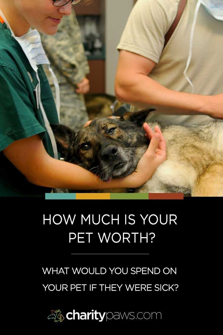 What Would You Spend To Save Your Sick Pet Sick Pets Pets Sick