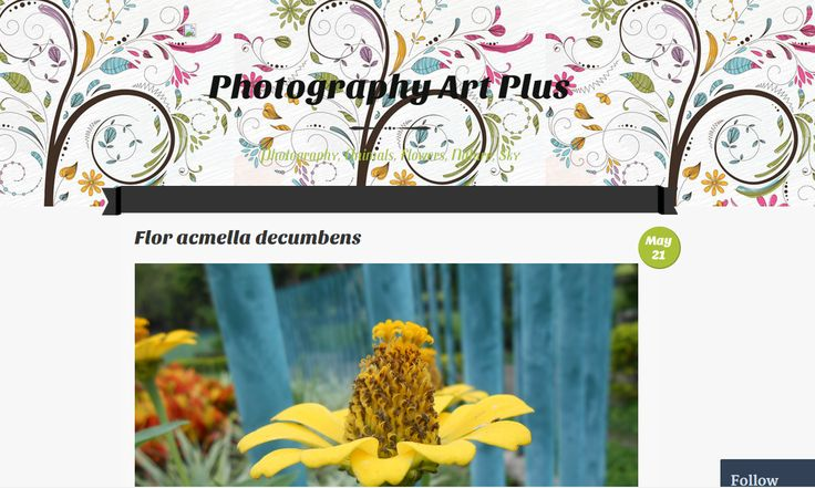 Blog to follow: photographyartplus.wordpress.com Photography,animals, flowers,nature and sky.