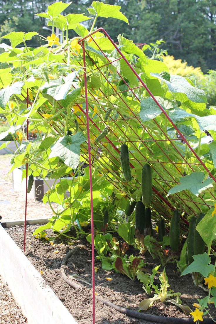 "Cucumber Trellis - Large | Powder Coated Steel | Gardener's Supply |  $34.95 in red or green | 48"" square"
