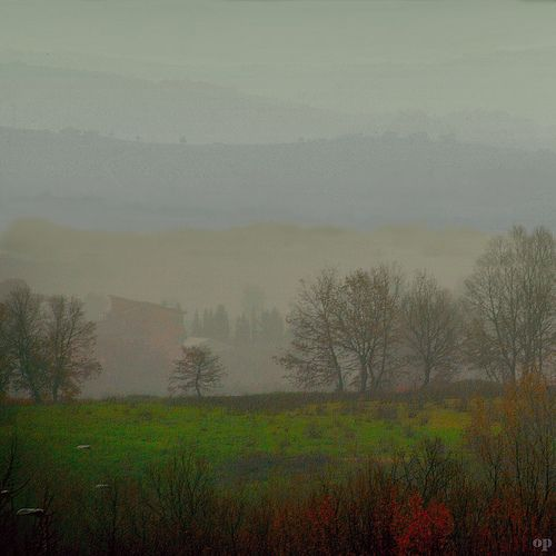 Foggy Morning | Osvaldo_Zoom