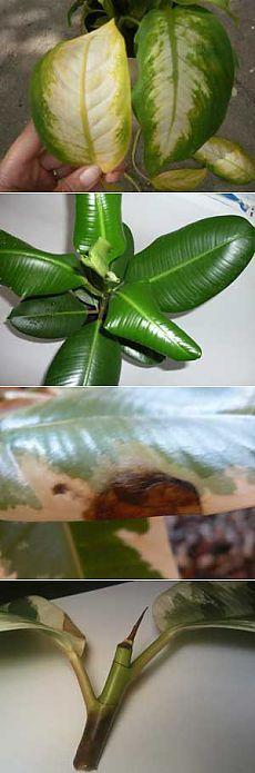 Причины болезни растений и как их лечить — Сад на подоконнике