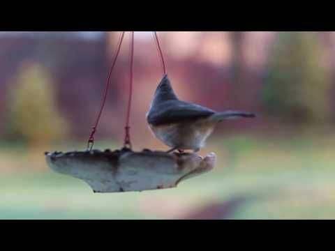 Birds at Feeder, Comedy – funny – whats app – facebook – ALLMIX - YouTube intro, video 999 -  #bird #birding #bird_watchers_daily #animal #birdwatching #pets #nature_seekers #birdlovers Dog Training – The Perfect Pooch System!  Click HERE! Birds at Feeder, Comedy – funny – whats app – facebook – ALL MIX – video 4 Crazy, Comedy, funny, comedy video, funny video, facebook,... - #Birds
