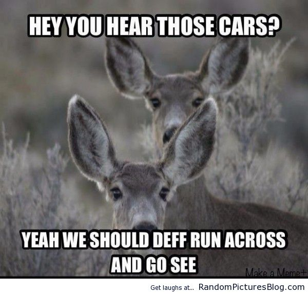 deer hunting memes - photo #34