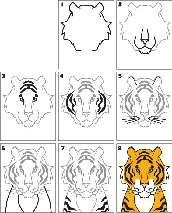 how-to-draw-a-tiger