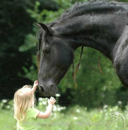 fotos de caballos en general,,:P