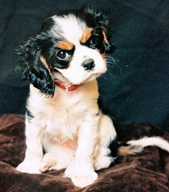 Baby Dilly  by meg price, via Flickr: Babies, Small Dogs, Cute Cats, Dilly Dog, Puppy, Comment, Baby Dilly, Baby Cats, Animal