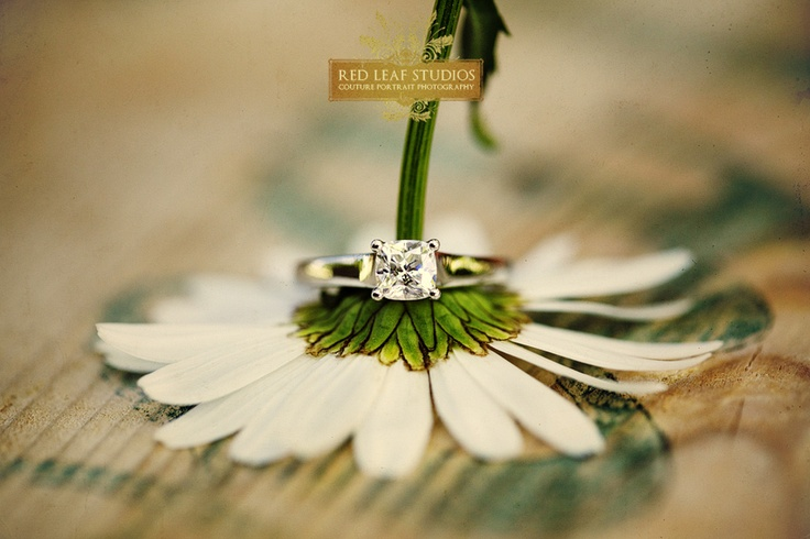 weddingGerber Daisies, Wedding Photography, Photos Ideas, Engagement Photos, Wedding Photos, Wedding Day Photos, Rings Pictures, Wedding Rings Shots, Engagement Rings