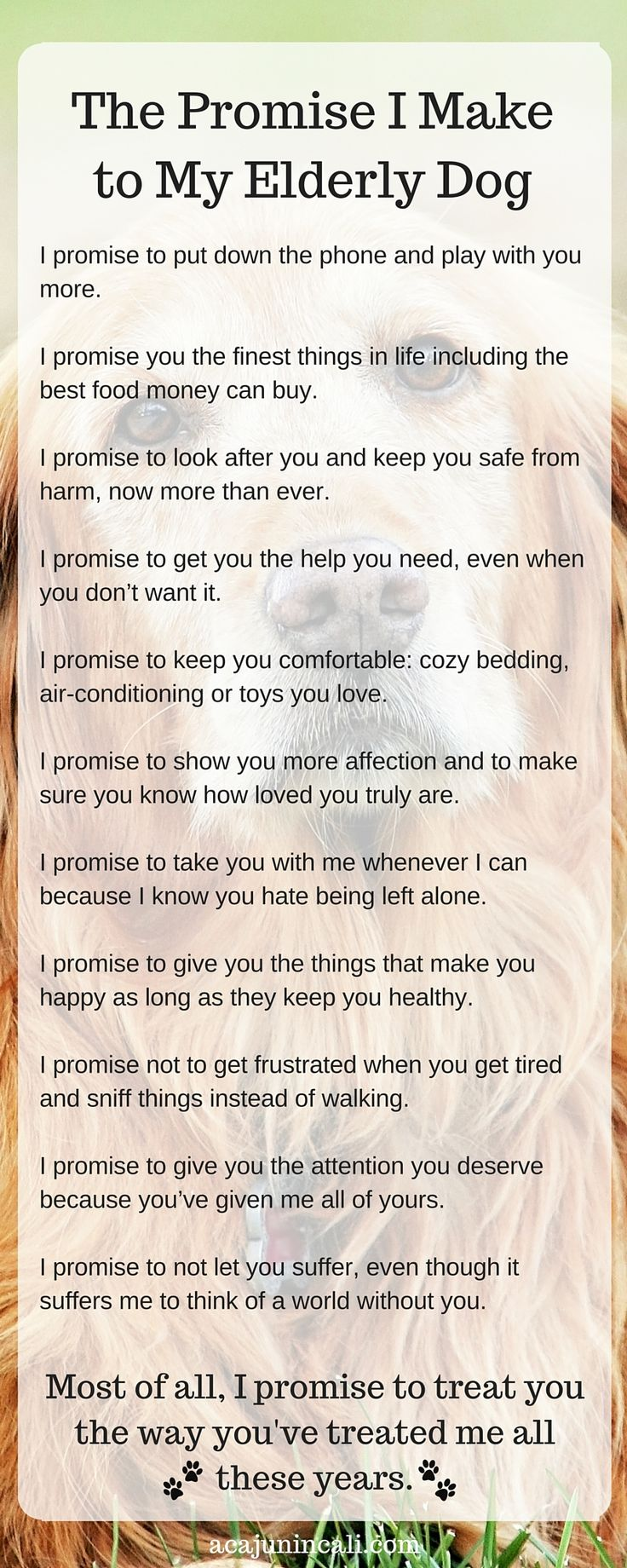 Having an senior pet changes many things about our lifestyle. But no matter what, they are part of our family. Read the promise I make to my elderly dog. #seniorpet #petcare via @acajunincali