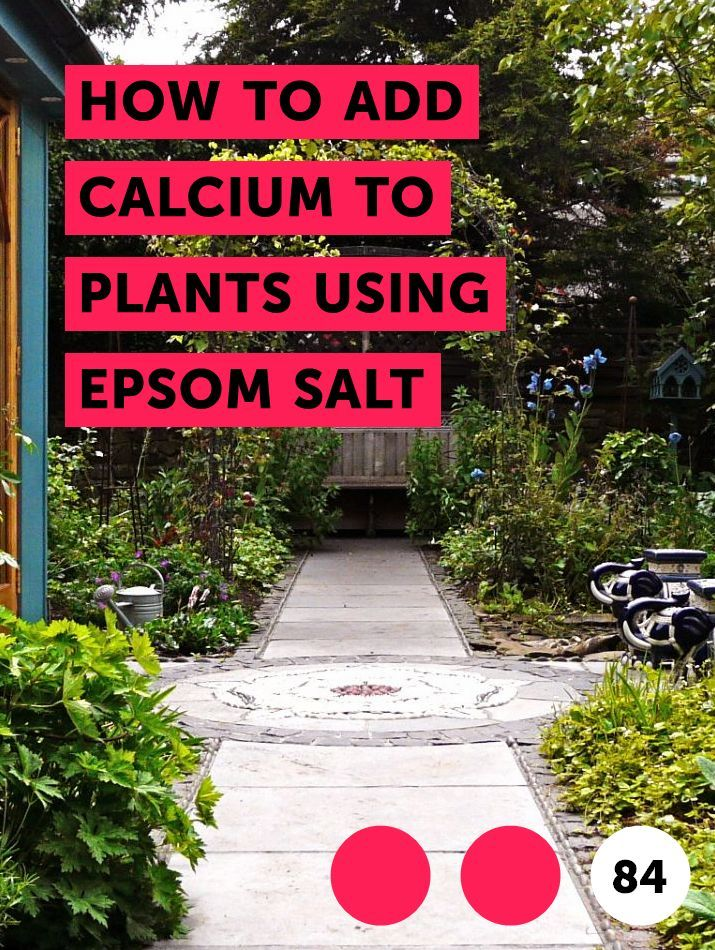 Learn How To Add Calcium To Plants Using Epsom Salt How To Guides Tips And Tricks Petunia Plant Lawn Mower