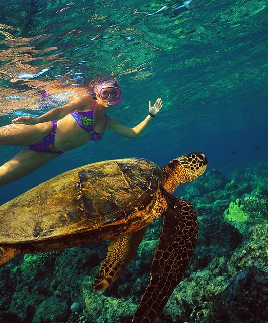 Snorkling with turtles