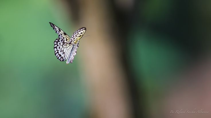 Butterfly Collection 1 on Behance
