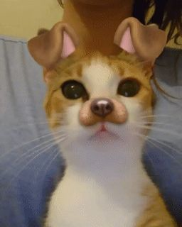 Cats using Snapchat effects? Totally adorable!
