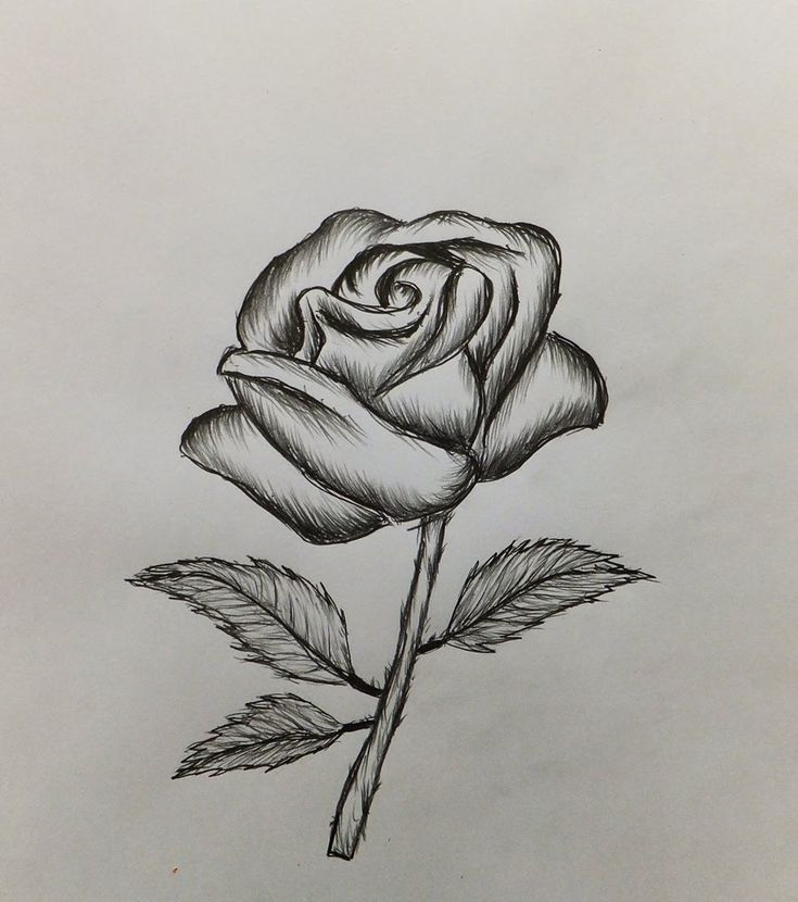 how to draw a rose - 735×830