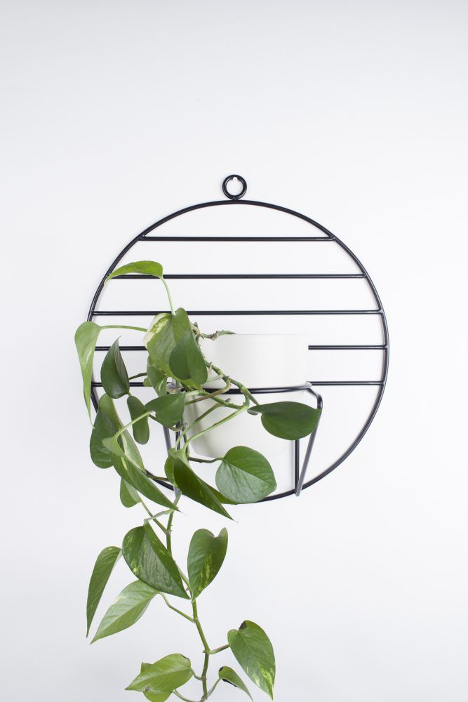 SOL hanging plant stand  | BUJNIE |  Beautiful and functional plant stands. #plants #plantstand #hangingplantstand #plantsarefriends #cosmo #bujnie #hanging #jungle #botanical #floral #design #product