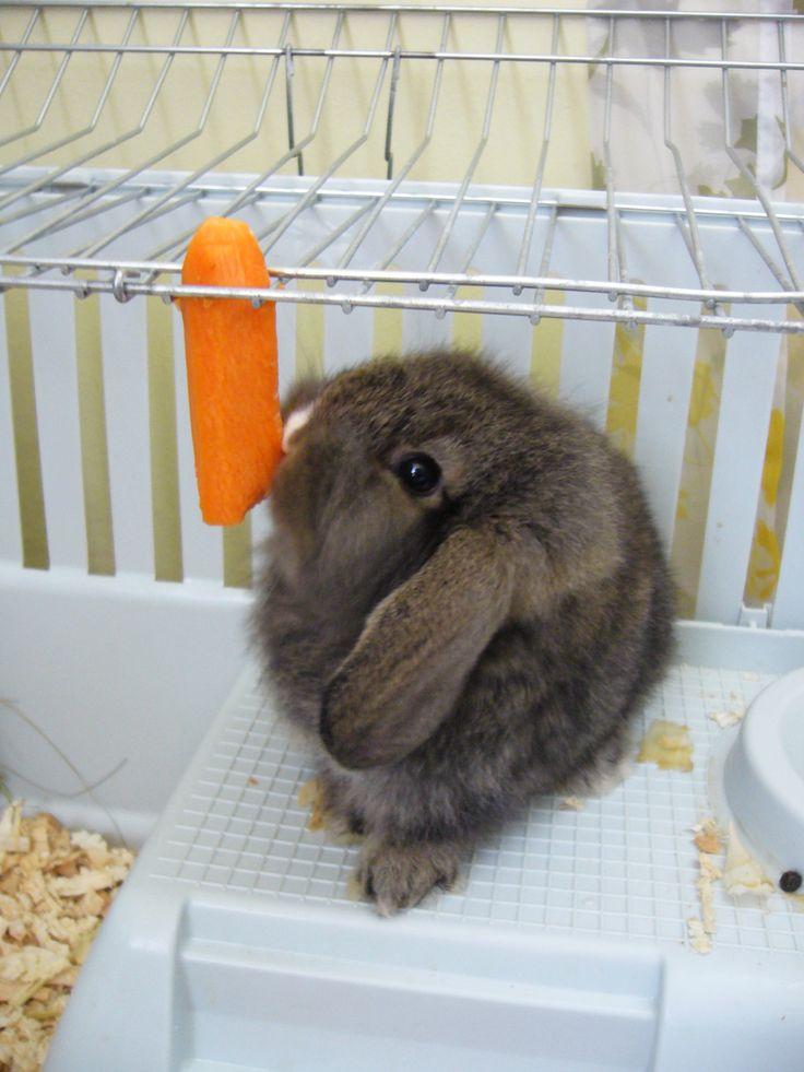 small cute rabbit
