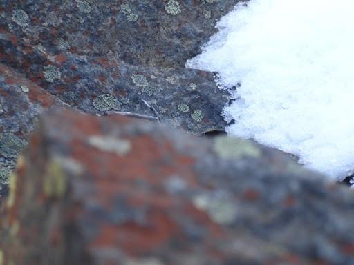 lichen snow n rocksPretty Things, Lichen Snow