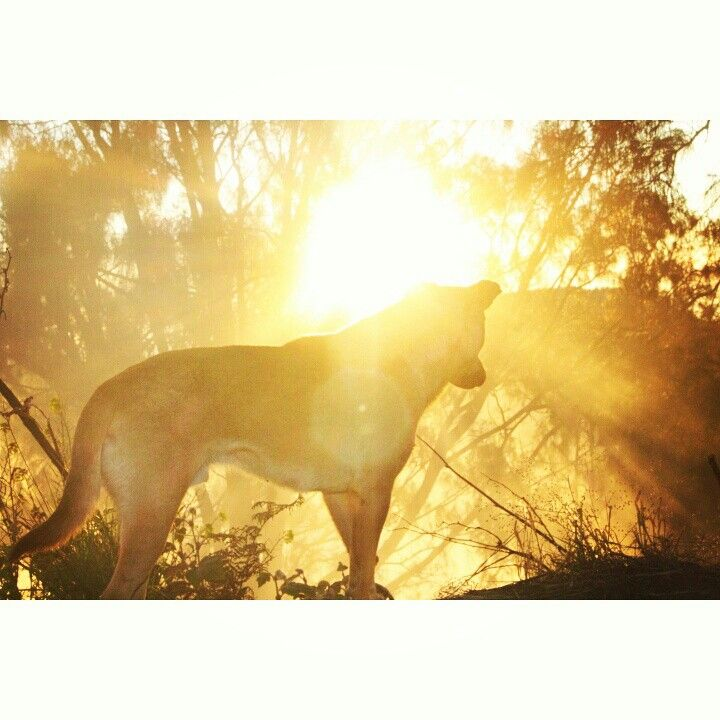 A dog with sunrise at bromo