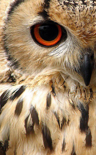 The eye of owl is upon you...