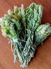 Greek Tea  Sideritis - Wikipedia, the free encyclopedia