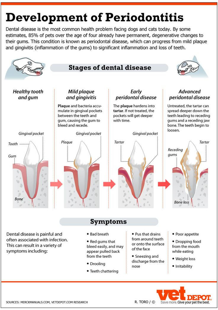 An In-Depth Look at Dental Disease in Dogs & Cats   VetDepot.com