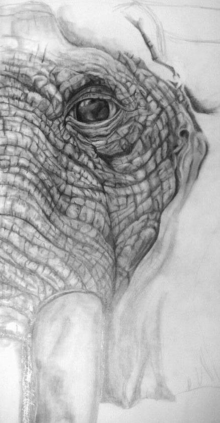 graphite elephant by Pamela Schanck, via Behance