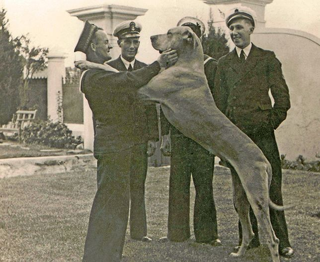 """This is the story of an exceptional dog called """"Just Nuisance – Able Seaman"""" Follow the link to read this heartwarming story. http://www.gondwana-collection.com/home/namibia/gondwanahistory/history-13-12-11-just-nuisance/"""