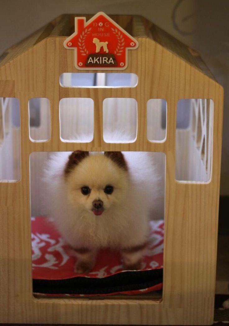dijjo, dog house
