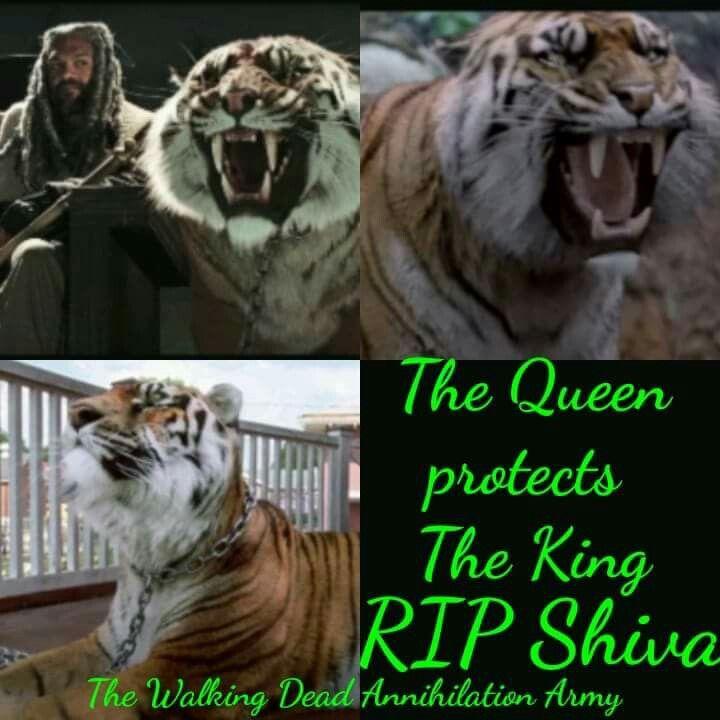 Shiva | S8E4 | Some Guy | The Walking Dead (AMC)