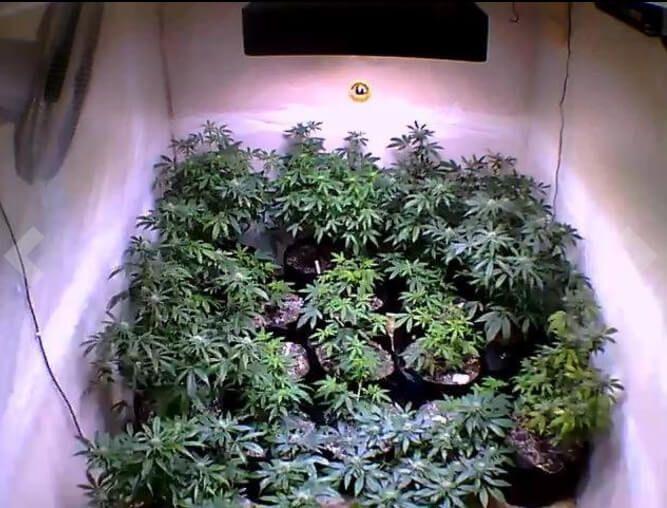 Led Plant Grow Lights Reviews Grow Lights For Plants Grow