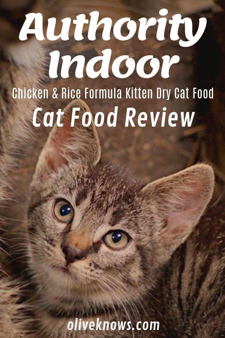 Authority Indoor Chicken Rice Formula Kitten Dry Cat Food Review Oliveknows In 2020 Katzen Futter Gesundes Katzenfutter Pets