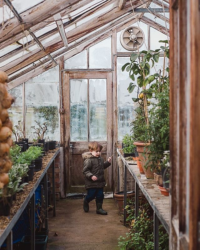 In one of his happy places his grandparents greenhouse. His favourite thing is gathering onions and throwing them into the tanks of water set into the ground below the shelves. . #ihavethisthingwithglasshouses #greenhouse #growsomethinggreen #greenedit #greenstagram #glasshouse #plantsmakepeoplehappy #curiouslittleexplorers #adventurelikebeatrixpotter #natureindoors #smallmomentsofcalm #momentsofmine #kindredmemories #candidchildhood #childhoodunplugged #pixel_kids #tinybeansmoment…