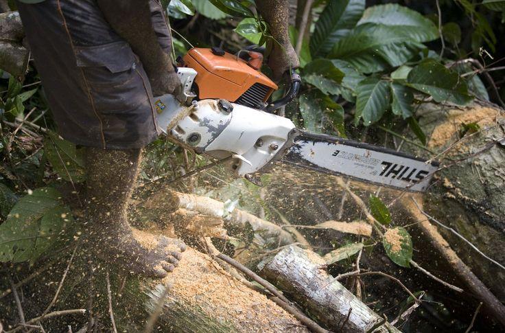 Der Motorsägen-Hersteller Stihl ist in Malaysia in Regenwaldvernichtung verstrickt. Der Vertrieb der Maschinen liegt dort weitgehend in den Händen der KTS-Gruppe. Zu deren Geflecht gehören Holz- und Palmölfirmen, denen illegale Rodungen auf dem Land Indigener vorgeworfen werden. Stihl darf keine Geschäfte mehr mit KTS machen.