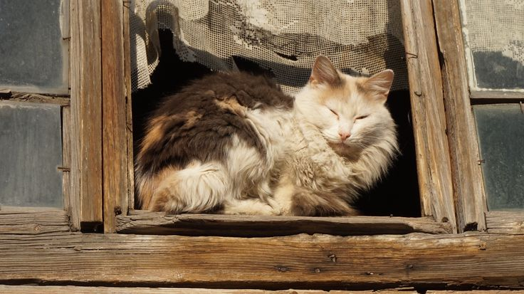 Cats from Samara, Russia