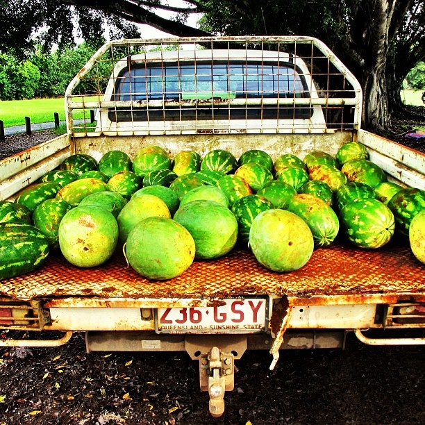 Why FNQ Rocks: wonderful watermelons sold out the back of roadside utes