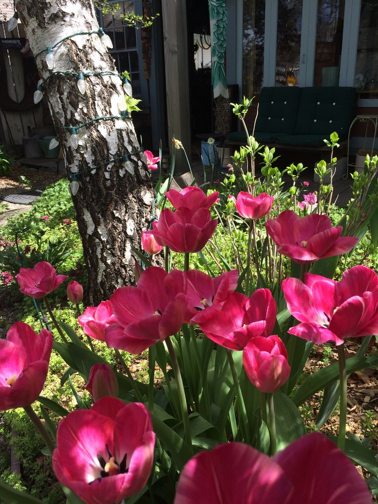 Motel  Cottages  Spring. 59 best Spring Around Ada s Place Motel Cottages images on