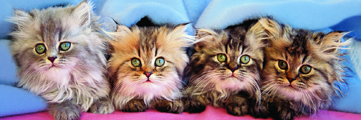 EuroGraphics Cats Under Blanket Jigsaw Puzzle 750-Piece Puzzle. These cuddly kittens don't fool anyone! We know they are up to something!