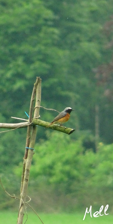 Na mijn vorige blogs nog maar een paar vogels! Deze week zat er vol mee en de week is nog niet eens voorbij. https://yoo.rs/w.harmsen11/blog/kievitten-kwartels-en-gele-kwikstaarten-149211
