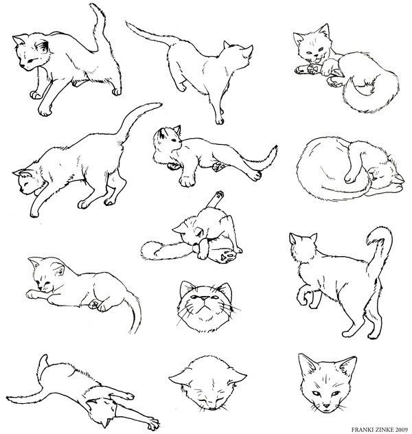 the 25 best simple cat drawing ideas on pinterest