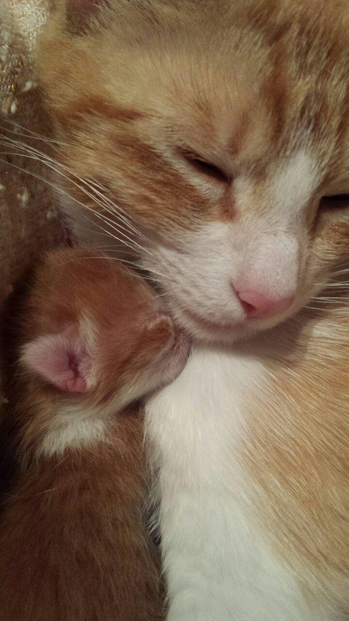 Mel Cat Cat1105 Thetruestoryofmylife Kitten Kittens