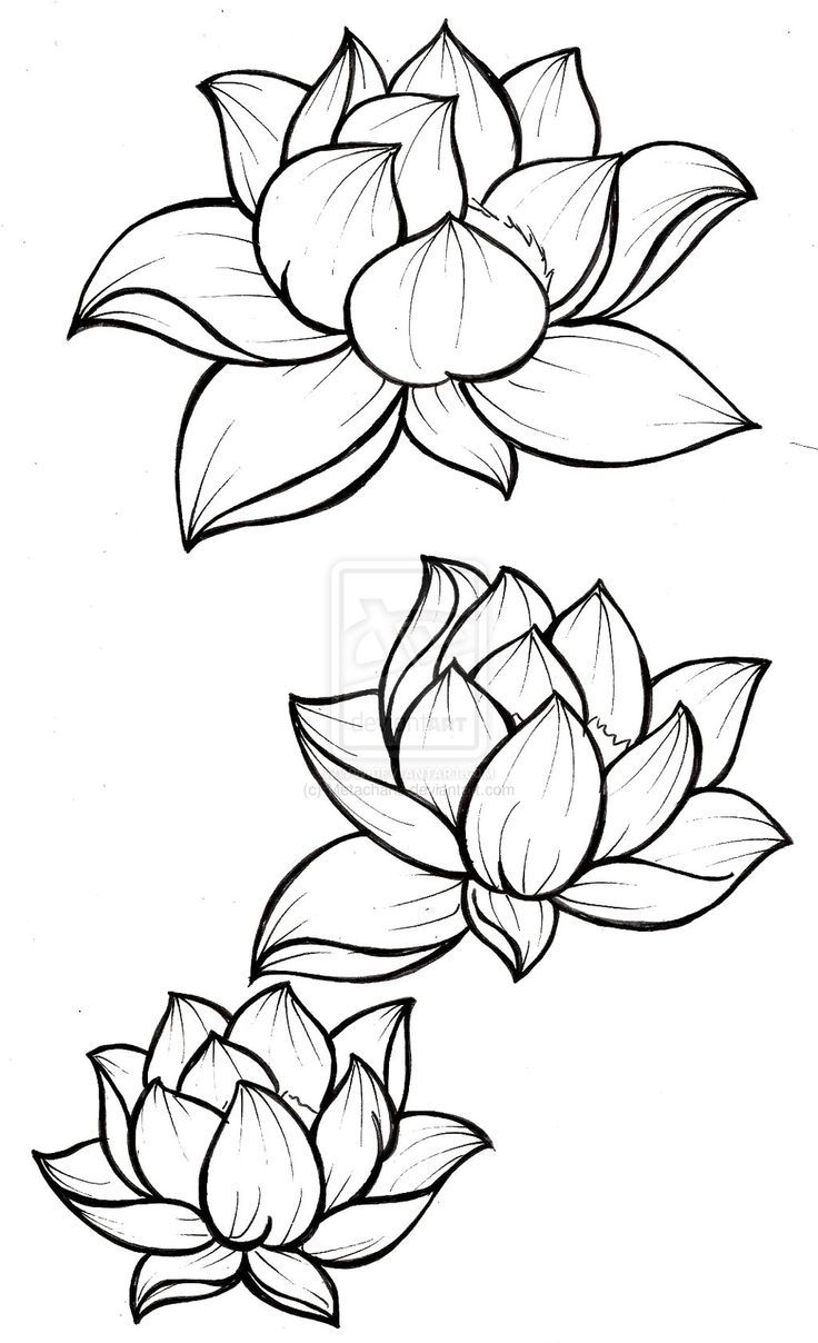 Lotus Blossom Tattoo by ~Metacharis on deviantART
