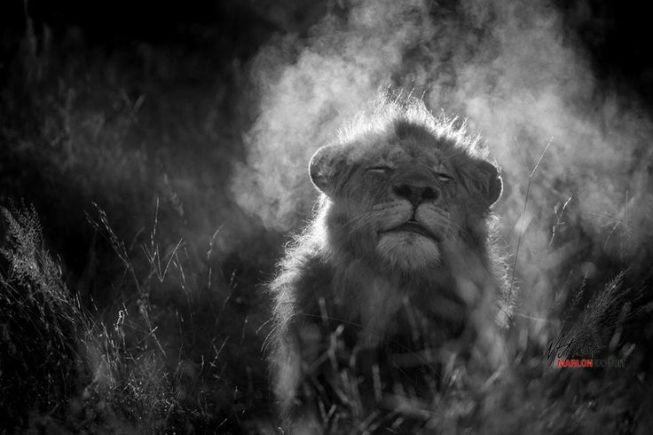 A happy and blessed Friday from the Afritrip.com Team...  How about a last minute weekend camping getaway? - Credit: http://ow.ly/XYrJO    #Afritrip #lion #camping #TGIF