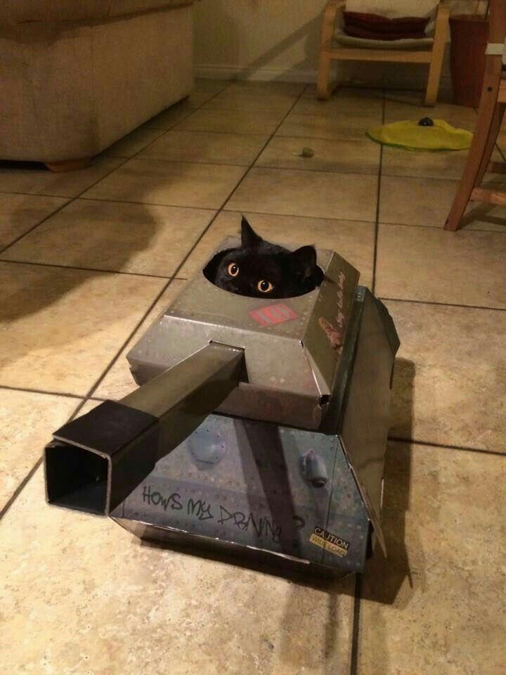 Watch out! The cat has a tank!!!