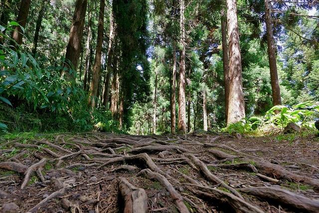 Hiking, La Reunion Island by ZX-6R, via Flickr