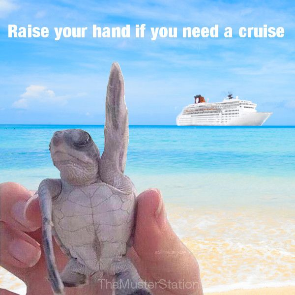 Raise your hand if you need a cruise!