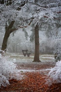 maya47000:  Winter Wonder~ by Ildiko Neer