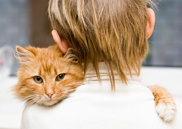 Affectionate cat - 10 Ways Your Cat Shows She Loves You