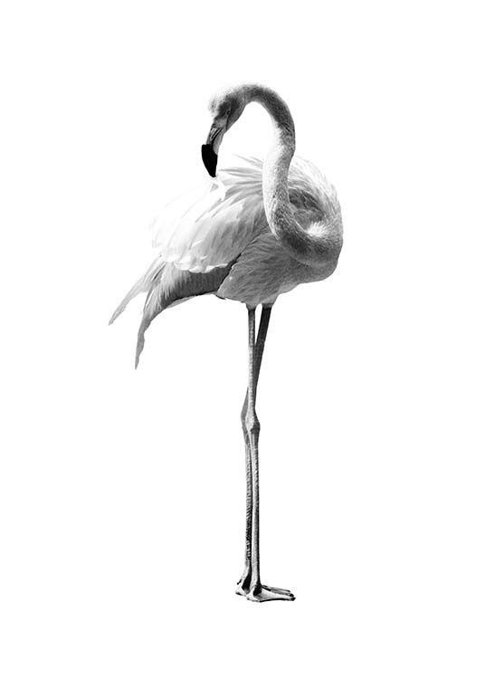 Flamingo black and white Poster in the group Posters & Prints / Black & white at…