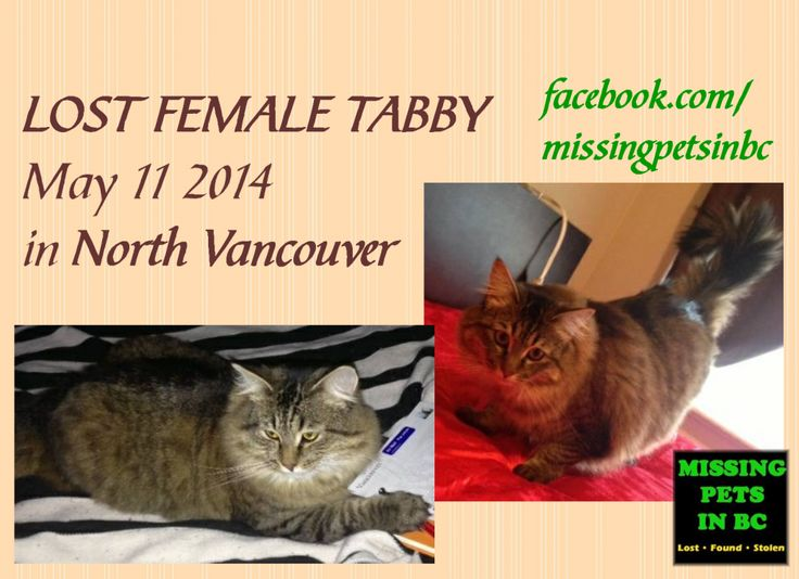 LOST MLH FEMALE TABBY in NORTH VANCOUVER (3rd at St.Patrick's area) - MAY 11 2014